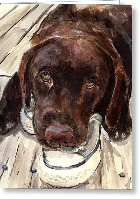 Chocolate Lab Greeting Cards - Deckhand Greeting Card by Molly Poole