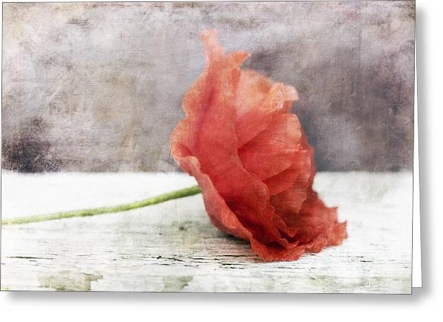 Redish Greeting Cards - Decor Poppy Red Greeting Card by Priska Wettstein