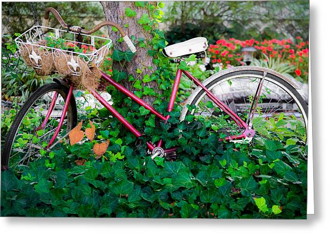 Flowers On Line Greeting Cards - Decorative Bicycle  Greeting Card by Shelby  Young