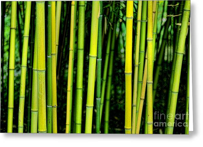Culm Greeting Cards - Deep Bamboo Greeting Card by Olivier Le Queinec