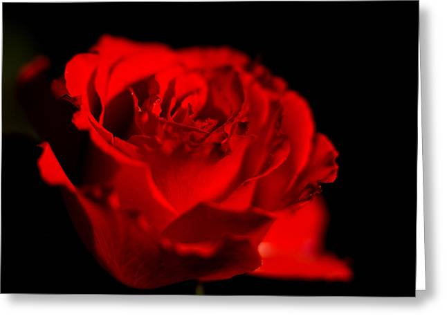 Rose Highlights Greeting Cards - Deep Dark Rose Greeting Card by Todd M Bloomer