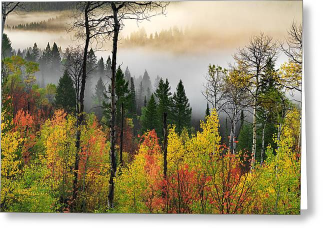 Deep Forest Autumn Greeting Card by Leland D Howard