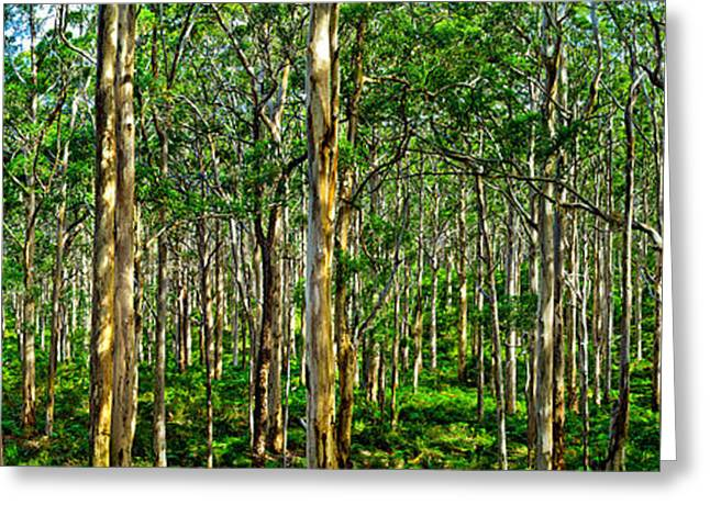 Deep Greens Greeting Cards - Deep Forest Greeting Card by Az Jackson