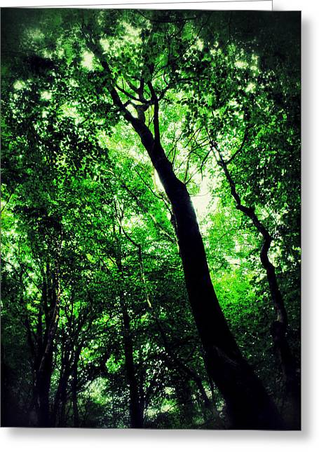 Deep Greens Greeting Cards - Deep Forest Greeting Card by Ian Hufton