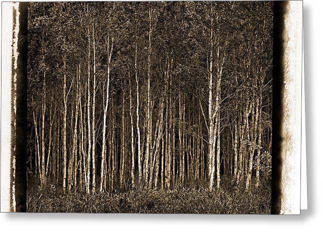 Russ Brown Greeting Cards - Deep Forest Greeting Card by Russ Brown