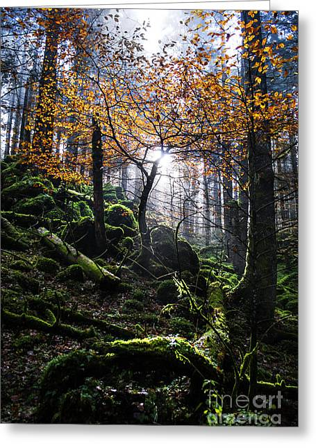 Mosses Greeting Cards - Deep forest Greeting Card by Yuri Santin