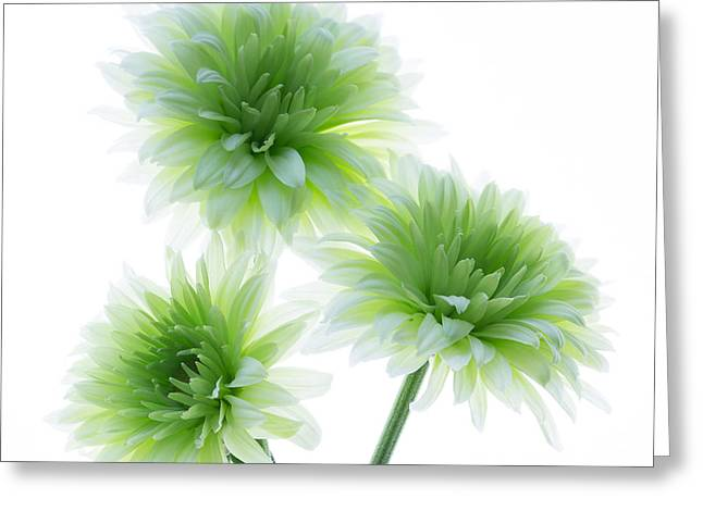 Botanical Greeting Cards - Deep in the roots all flowers keep the light Greeting Card by Kim Aston