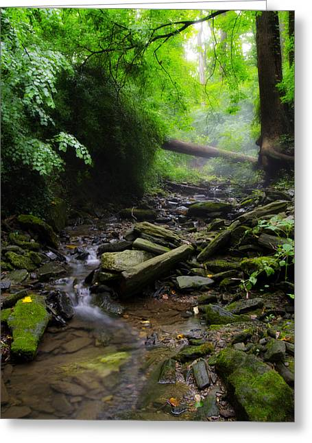Stream Digital Greeting Cards - Deep in the Woods Greeting Card by Bill Cannon