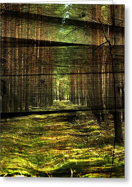Branch Avenue Greeting Cards - Deep in the woods Greeting Card by Nathan Wright