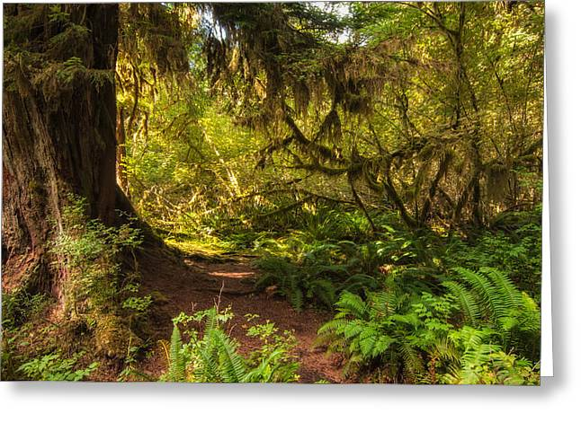 Deep into the Hoh Rain Forest Greeting Card by Rich Leighton