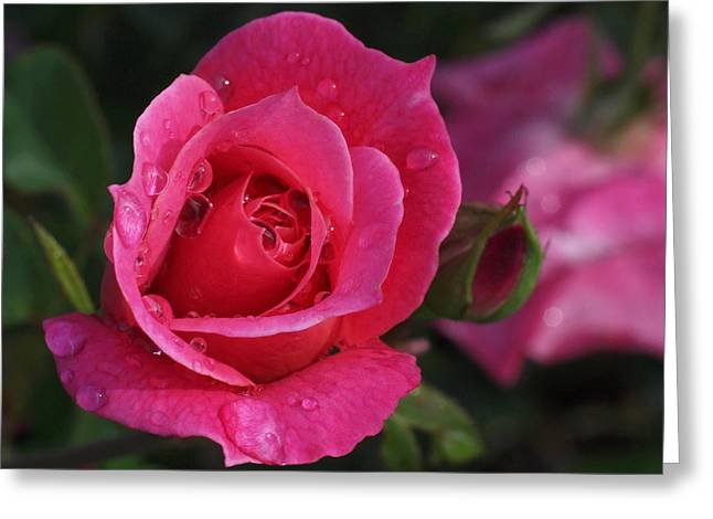 Deep Pink Beauty Greeting Card by Rona Black