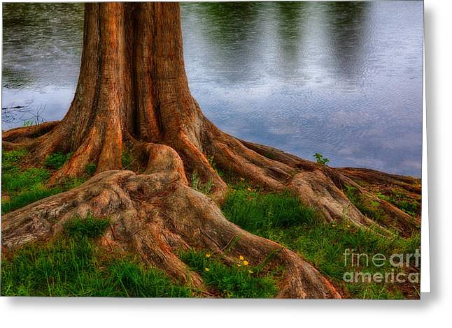 Tree Roots Art Greeting Cards - Deep Roots - Tree on North Carolina Lake Greeting Card by Dan Carmichael