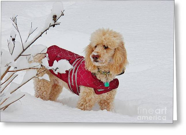 Dog In Snow Greeting Cards - Deep Snow I Go Greeting Card by Judy Via-Wolff