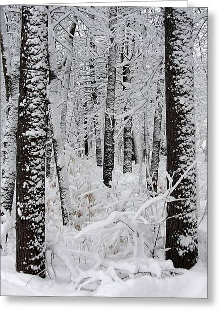 Spring In Maine Greeting Cards - Deep Snow In The Forest Greeting Card by Lynn-Marie Gildersleeve