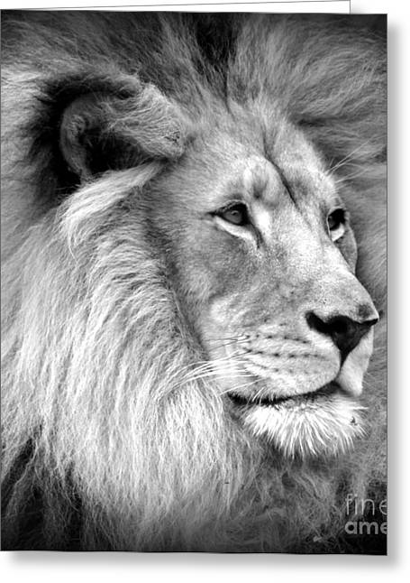 King Of Beast Prints Greeting Cards - Deep Thought Greeting Card by C Ray Roth