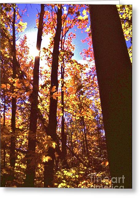 Indiana Autumn Greeting Cards - Deep Within The Autumn Woods Greeting Card by Rory Cubel