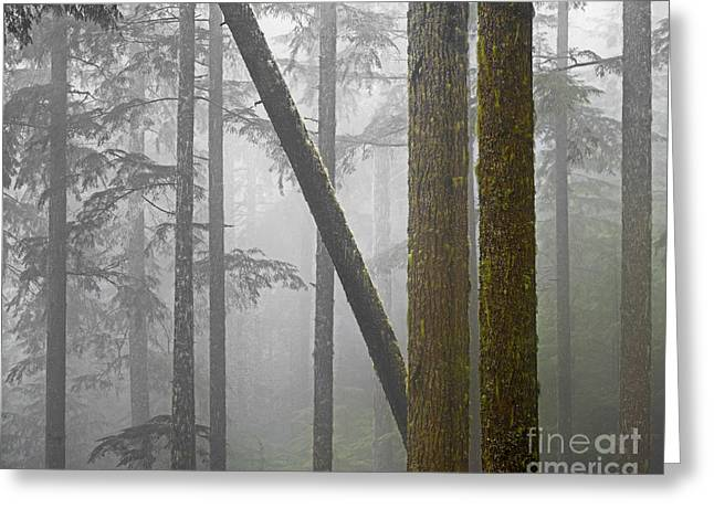 Crossover Greeting Cards - Deep Woods Greeting Card by Don Hall