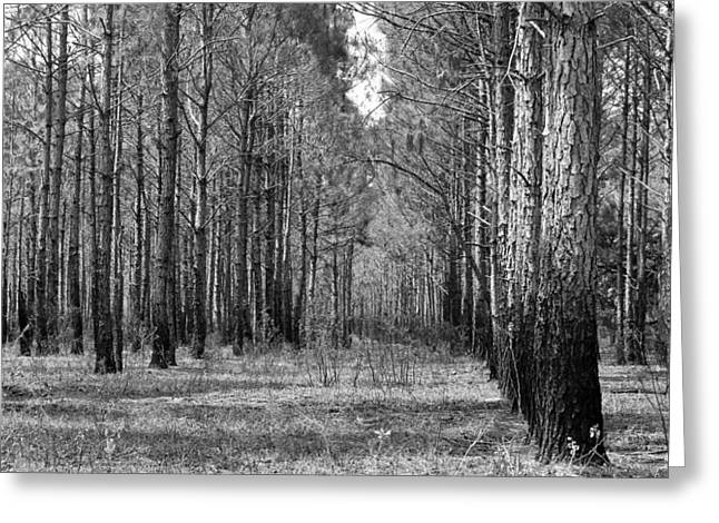 Hunting Cabin Greeting Cards - Deep Woods Greeting Card by Matt Day