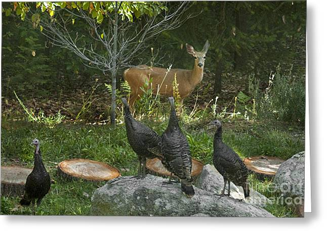 Young Turkey Greeting Cards - Deer And Wild Turkeys Greeting Card by Ron & Nancy Sanford