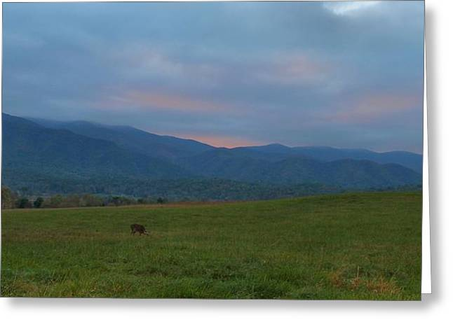 Gatlinburg Tennessee Greeting Cards - Deer At Sunrise Greeting Card by Dan Sproul