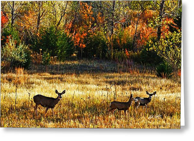 Bill Kesler Greeting Cards - Deer Autumn Greeting Card by Bill Kesler