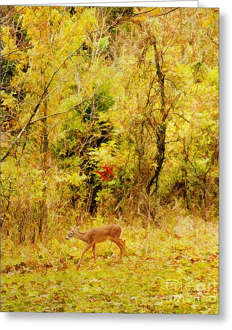 Dominant Greeting Cards - Deer Autumn Greeting Card by Darren Fisher