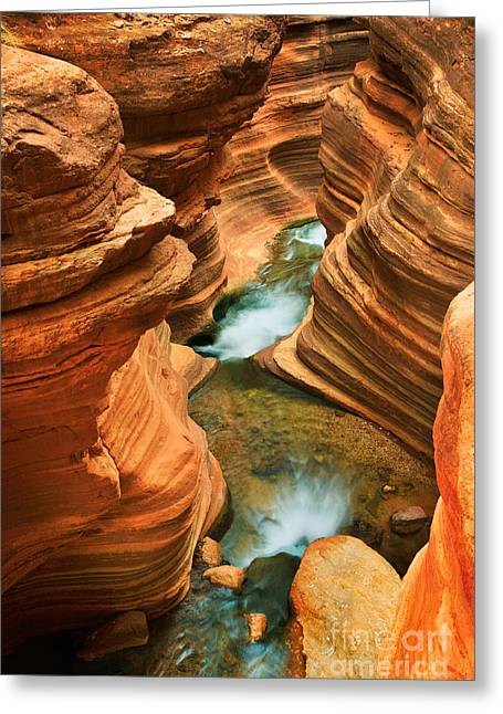 State Park Canyon Greeting Cards - Deer Creek Slot Greeting Card by Inge Johnsson