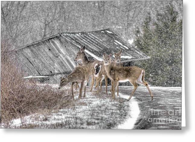 Barn North Carolina Greeting Cards - Deer Crossing Ahead Greeting Card by Benanne Stiens