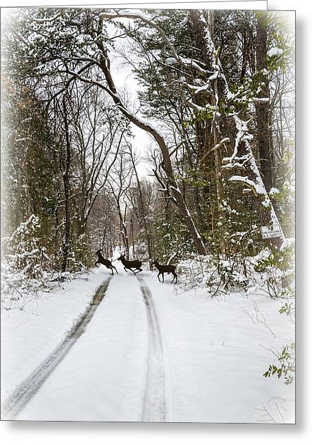 Enhanced Greeting Cards - Deer Crossing Greeting Card by Brian Wallace