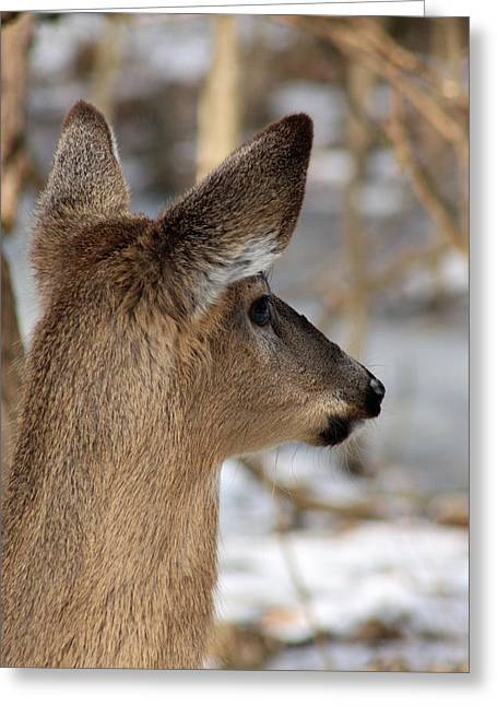Deer Day Dreamer Greeting Card by Lorna Rogers Photography