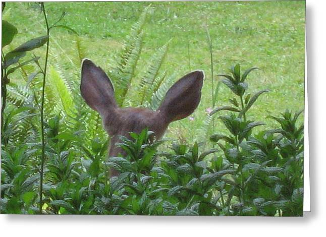 Deer Ear In A Mint Patch Greeting Card by Kym Backland