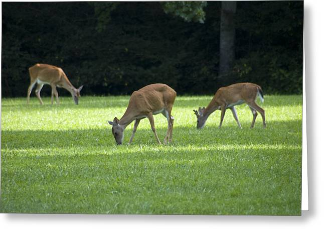 Deer Camp Greeting Cards - Deer for Dinner Greeting Card by Mark Early