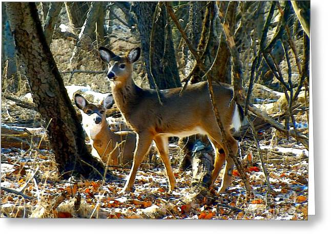 Uplifting Greeting Cards - Deer Friends Greeting Card by Robyn King