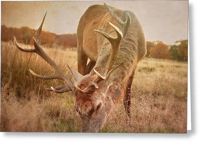Deer Greeting Cards - Deer II Greeting Card by Violet Gray