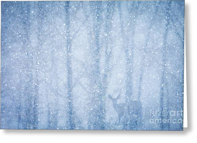 Snowstorm Greeting Cards - Deer in a Snowy Forest Greeting Card by Diane Diederich
