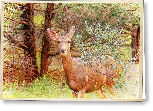 Hdr Look Digital Greeting Cards - Deer in Forest Greeting Card by Donna Haggerty