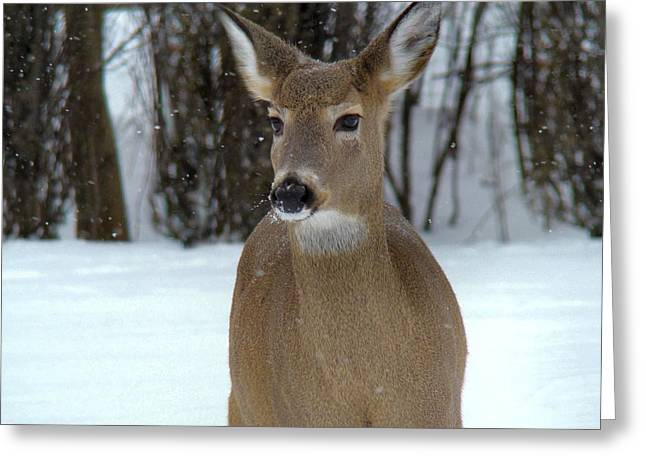 Deer In Snow Greeting Cards - Deer In Snow Greeting Card by Gothicolors Donna Snyder