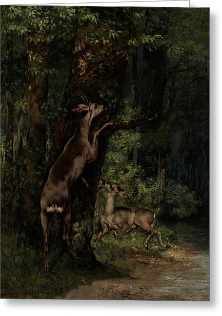 Green Leafs Greeting Cards - Deer in the Forest Greeting Card by Gustave Courbet