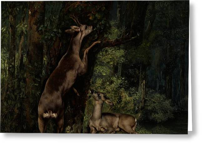 Deer in the Forest Greeting Card by Gustave Courbet