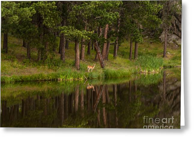 Haze Greeting Cards - Deer in the Mist Greeting Card by Steven Reed