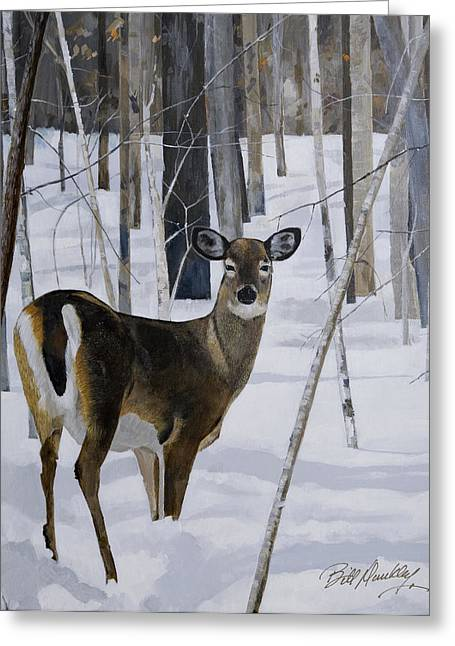 Deer In The Snow Greeting Card by Bill Dunkley