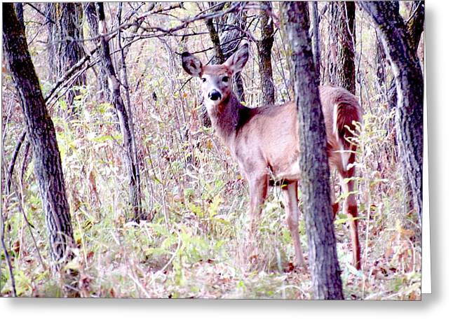 Forest Pyrography Greeting Cards - Deer in the Woods Greeting Card by Elaine Weiss