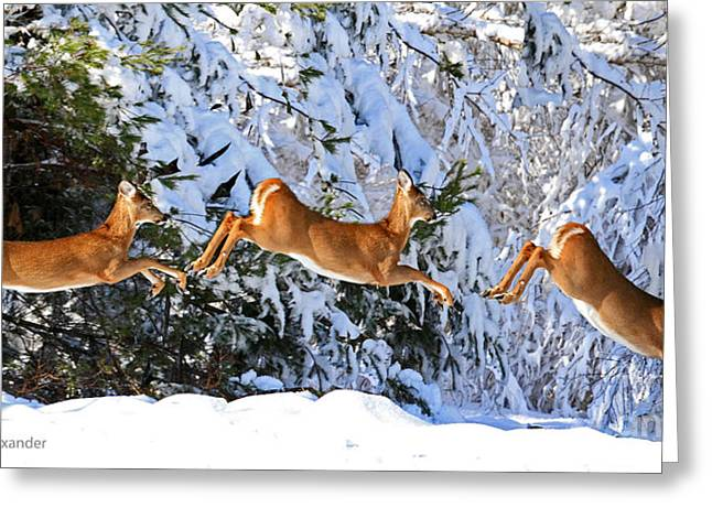 Lloyd Alexander Greeting Cards - Deer Jump Greeting Card by Lloyd Alexander