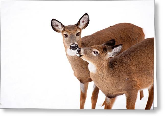 Deer In Snow Greeting Cards - Deer Kisses Greeting Card by Karol  Livote