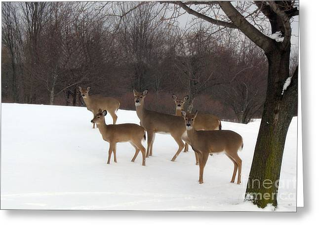 Surreal Nature Photography Greeting Cards - Deer Photography - Michigan Deer Herd Winter Snow Landscape  Greeting Card by Kathy Fornal