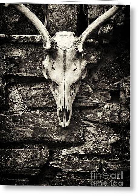 Tim Greeting Cards - Deer Skull  Greeting Card by Tim Gainey