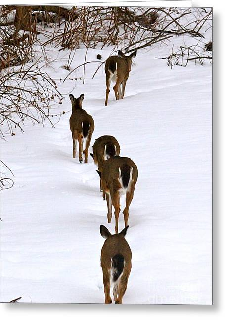 Jay Nodianos Greeting Cards - Deer Trail Greeting Card by Jay Nodianos