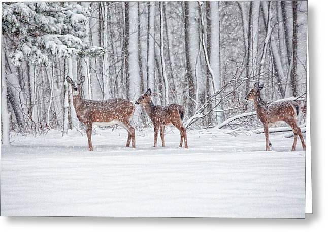Connecticut Wildlife Greeting Cards - Winter Visits Greeting Card by Karol  Livote