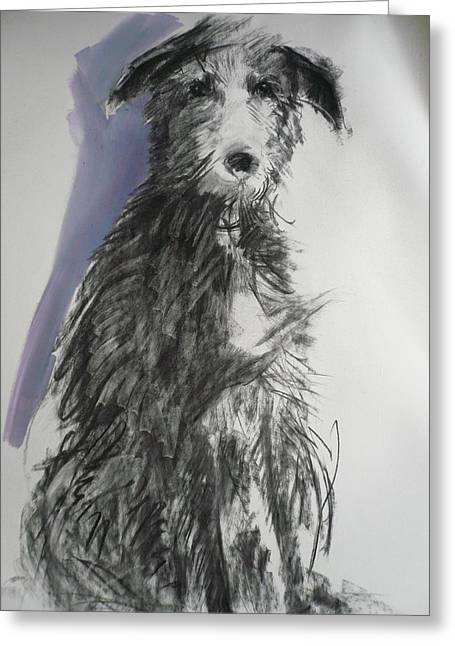 Scruffy Greeting Cards - Deerhound, 2012 Oil On Paper Greeting Card by Sally Muir