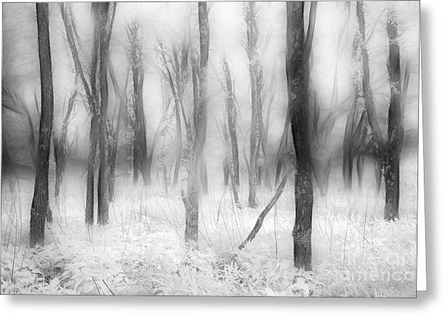 Surreal Landscape Greeting Cards - Defenders of the Forest II Greeting Card by Dan Carmichael
